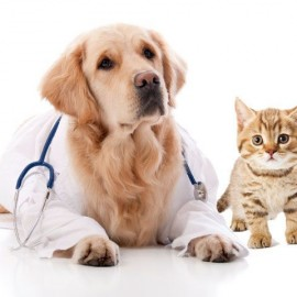 Things We Should Know About Pet Insurance for Our Dog